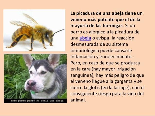 Picadura de insectos en perros - Cuando se puede banar a un perro ...