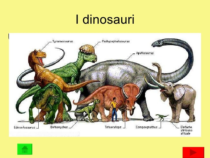 I dinosauri <ul><li>Una serie di video sui dinosauri di Piero e Alberto Angela </li></ul><ul><li>I DINOSAURI </li></ul>Q...
