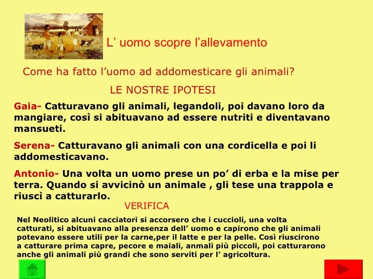 L' uomo scopre l'allevamento Come ha fatto l'uomo ad addomesticare gli animali? LE NOSTRE IPOTESI Gaia-  Catturavano gli a...