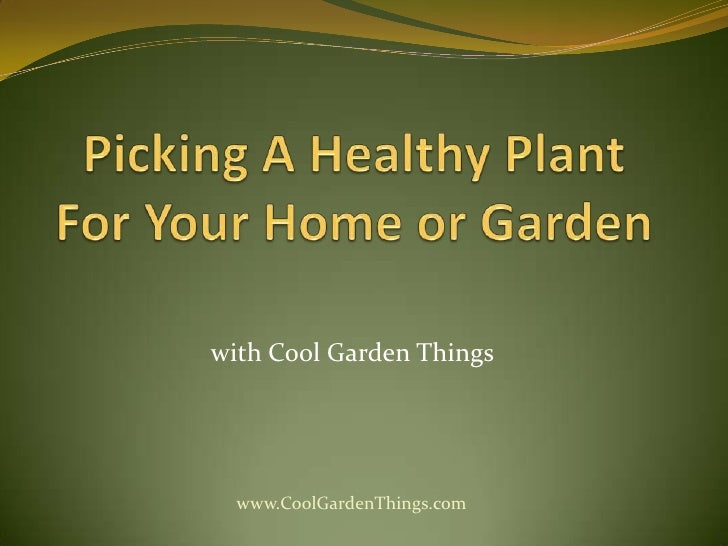 Picking A Healthy Plant For Your Home or Garden<br />withCool Garden Things<br />www.CoolGardenThings.com<br />