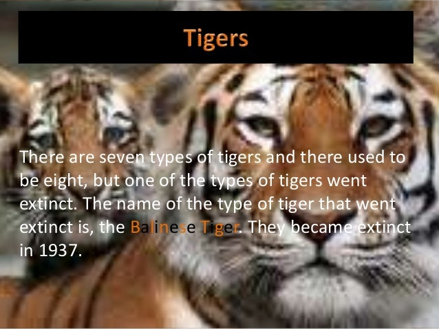 There are seven types of tigers and there used to be eight, but one of the types of tigers went extinct. The name of the t...