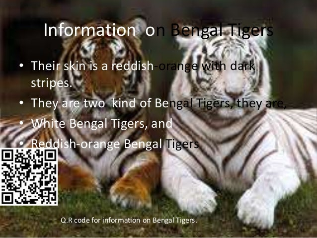 Pictures and information on tigers8 for Troye habitat