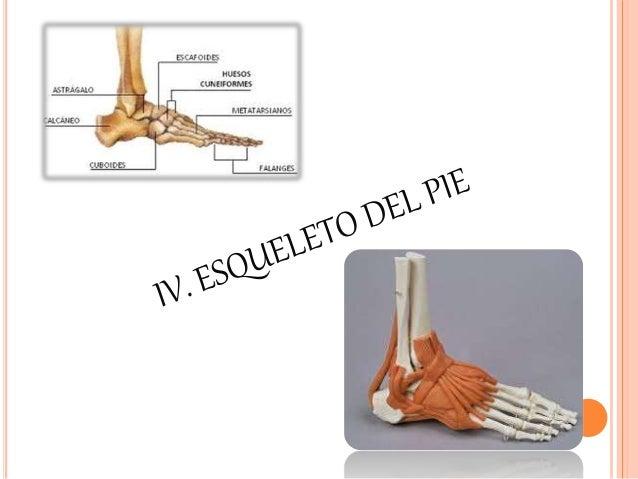 HUESOS DEL PIE (SON 3): (SON 3):