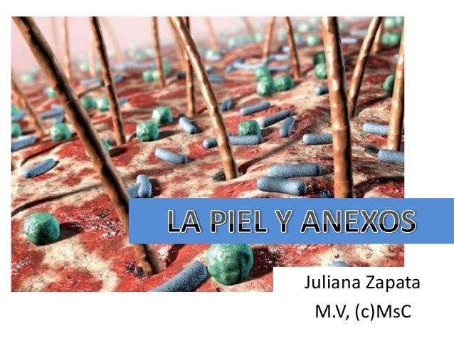 Juliana Zapata M.V, (c)MsC