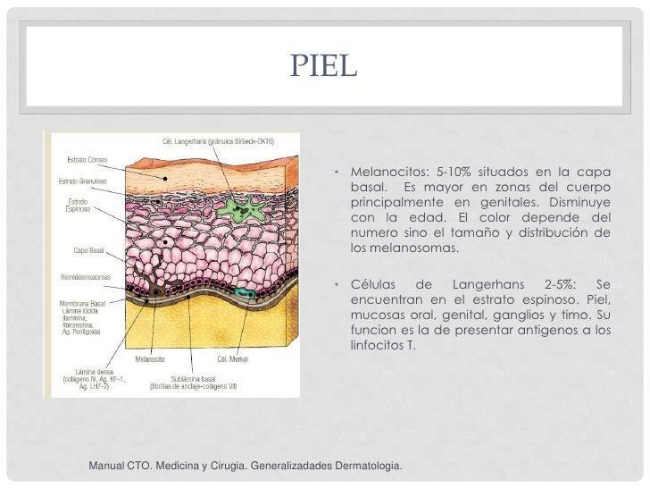 PIEL                                               • Melanocitos: 5-10% situados en la capa                               ...