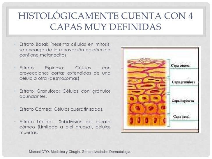 HISTOLÓGICAMENTE CUENTA CON 4      CAPAS MUY DEFINIDAS• Estrato Basal: Presenta células en mitosis,  se encarga de la reno...
