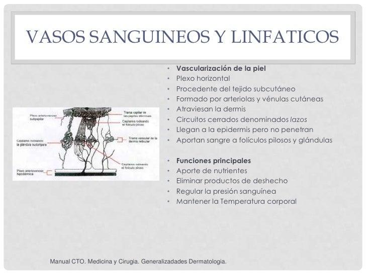 VASOS SANGUINEOS Y LINFATICOS                                          •   Vascularización de la piel                     ...
