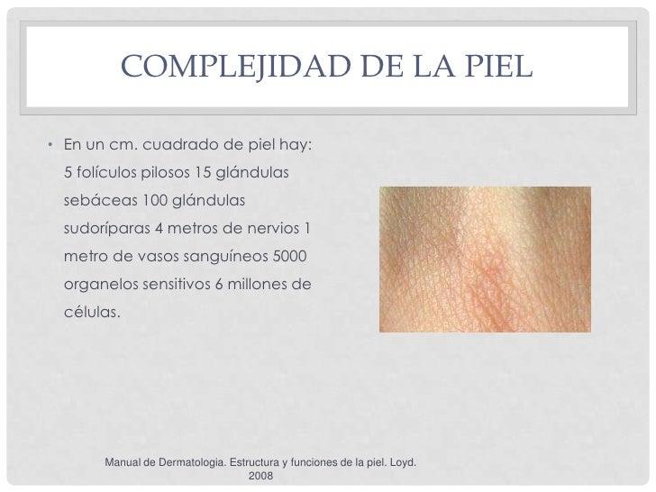 COMPLEJIDAD DE LA PIEL• En un cm. cuadrado de piel hay:  5 folículos pilosos 15 glándulas  sebáceas 100 glándulas  sudoríp...