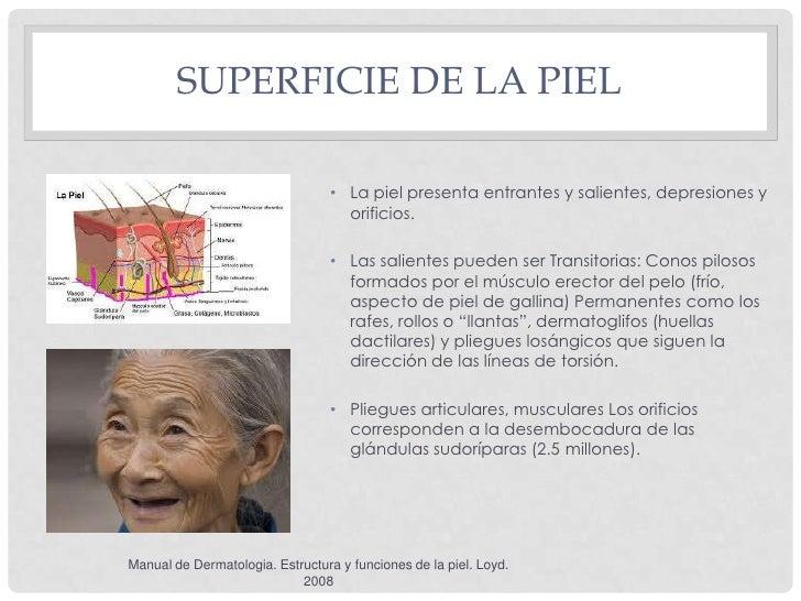 SUPERFICIE DE LA PIEL                                 • La piel presenta entrantes y salientes, depresiones y             ...