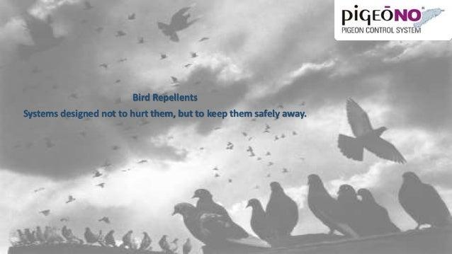 Bird Repellent Solutions