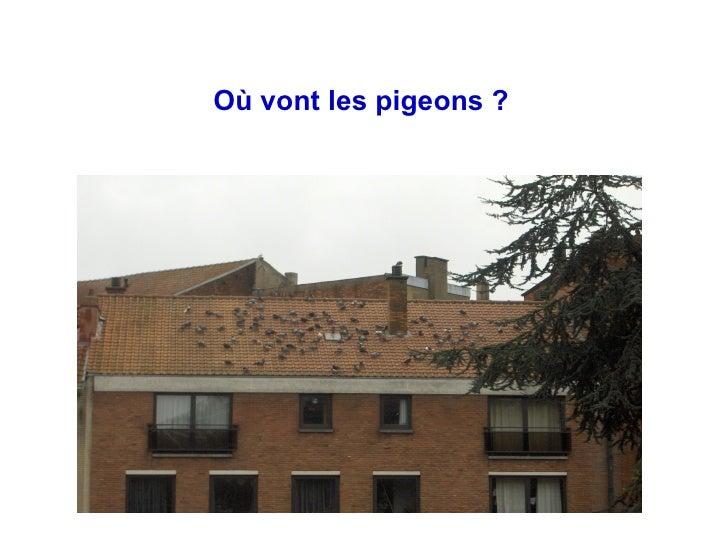 Où vont les pigeons ?