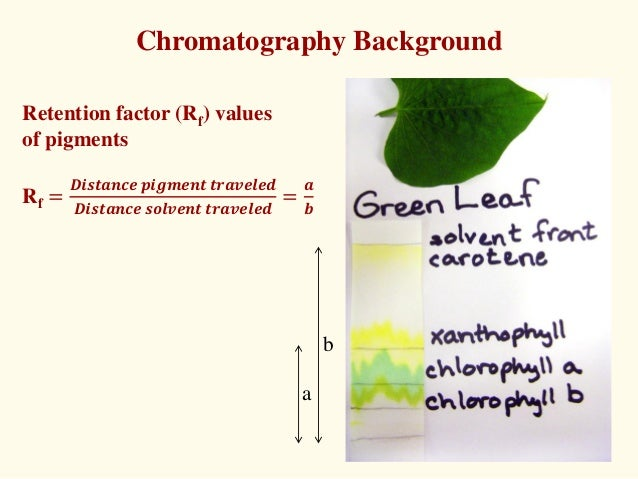 separation of leaves pigment essay Separation was not apparent the rf or retention factor is the ratio of the group was not able to gather data for all pigments distance travelled by the solute and the distance of the leaves the rf values were computed using travelled by the solvent that lands a value between both the upper and lower edges of the pigment to 0 and 1 (mifsud, nd.