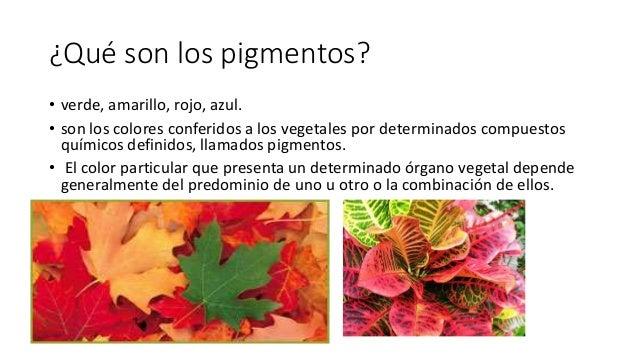 Pigmentos fotosint ticos for Cuales son los tipos de plantas