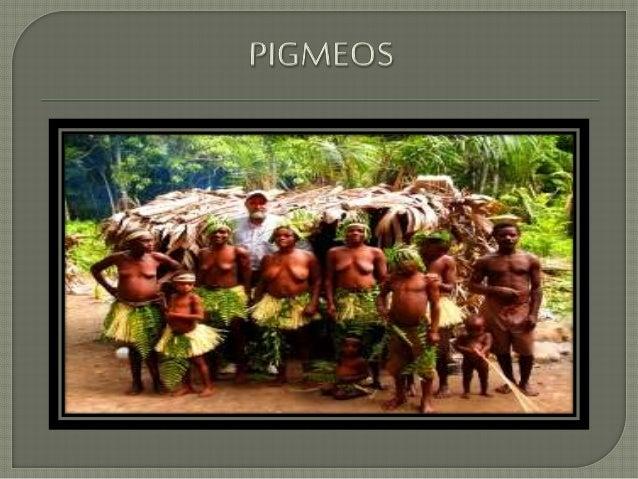 """Los pigmeos del cual su significado es """"pequeño tamaño"""", viven en las selvas ecuatoriales africanas, los podemos localizar..."""