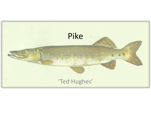 Pike 'Ted Hughes'