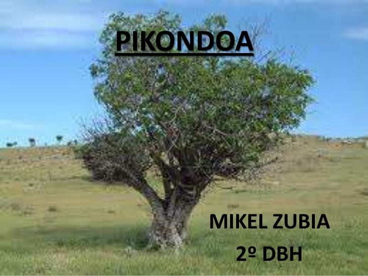 PIKONDOA     MIKEL ZUBIA       2º DBH