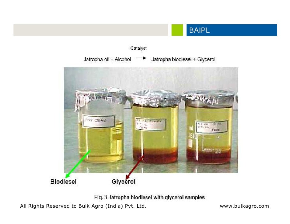 potential of biodiesel as a renewable Biofuels basics unlike other renewable energy sources biodiesel is made by combining alcohol (usually methanol) with vegetable oil.