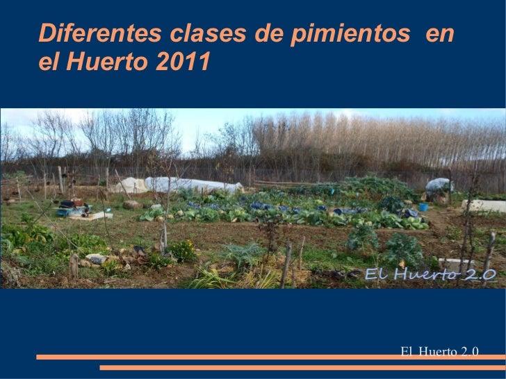 Diferentes clases de pimientos enel Huerto 2011                            El Huerto 2.0