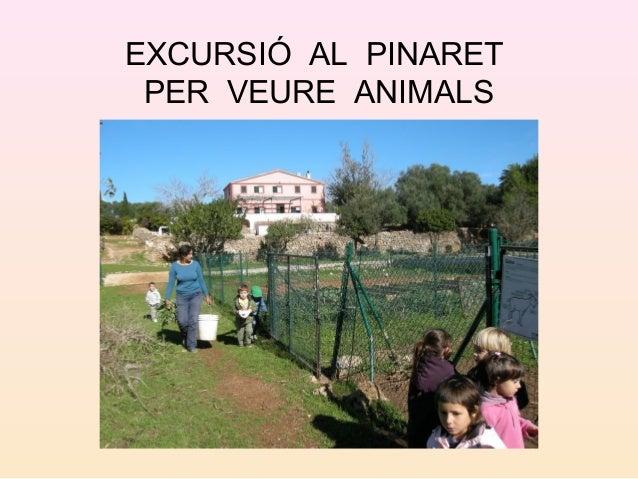 EXCURSIÓ AL PINARET PER VEURE ANIMALS