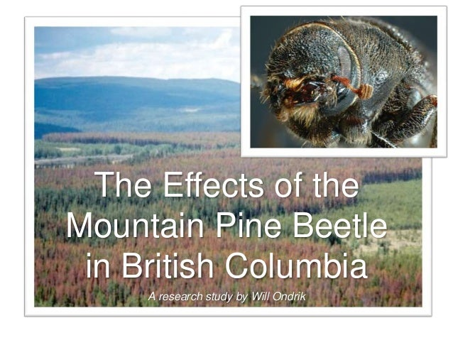 A research study by Will Ondrik The Effects of the Mountain Pine Beetle in British Columbia