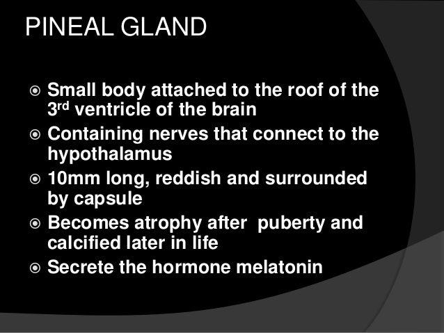 pineal gland, Human body