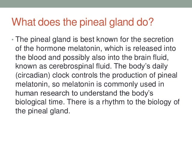 pineal gland.antomy .histology.function, Human Body