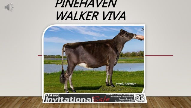 PINEHAVEN WALKER VIVA