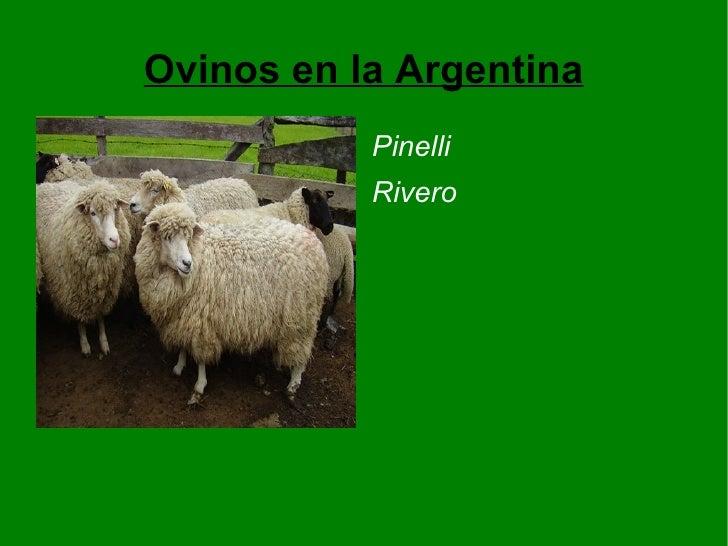 Ovinos en la Argentina <ul><li>Pinelli