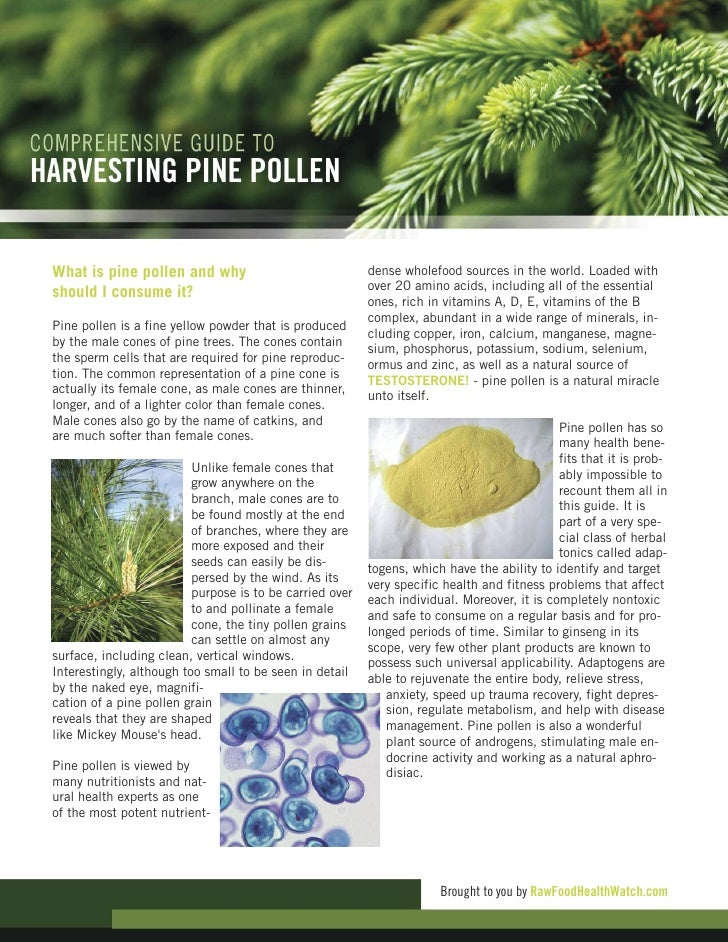What is pine pollen and why                               dense wholefood sources in the world. Loaded with               ...
