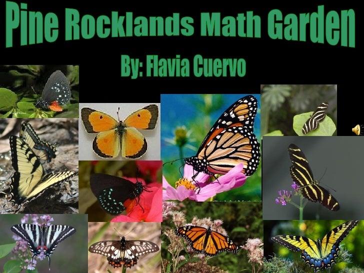 Pine Rocklands Math Garden By: Flavia Cuervo
