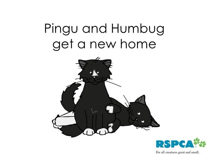 Pingu and Humbug  get a new home