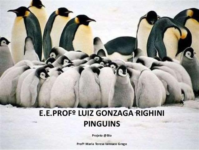 E.E.PROFº LUIZ GONZAGA RIGHINI PINGUINS Projeto @Bio Profº Maria Teresa Iannaco Grego