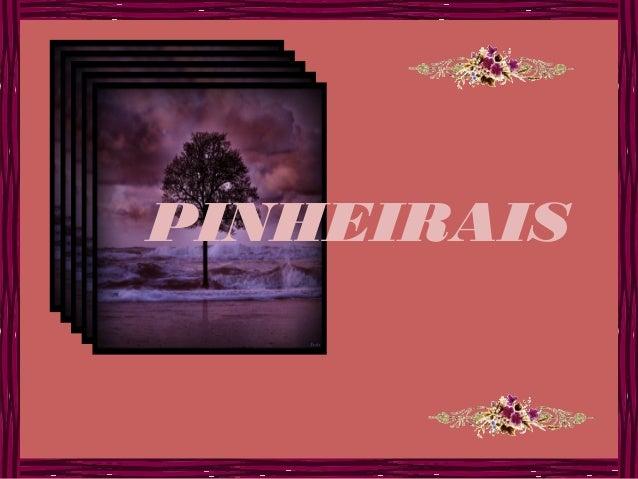 PINHEIRAIS