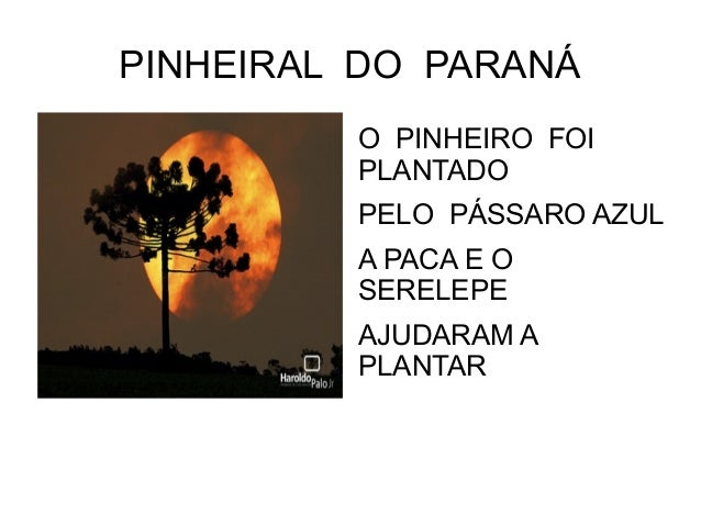 PINHEIRAL DO PARANÁ         O PINHEIRO FOI         PLANTADO         PELO PÁSSARO AZUL         A PACA E O         SERELEPE ...