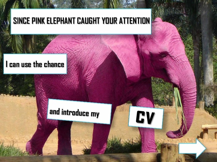 SINCE PINK ELEPHANT CAUGHT YOUR ATTENTIONI can use the chance