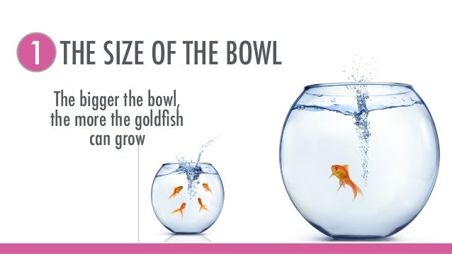 THE SIZE OF THE BOWL1 The bigger the bowl, the more the goldfish can grow