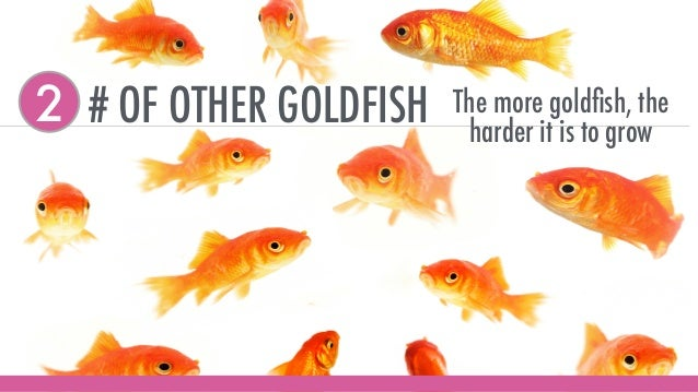 # OF OTHER GOLDFISH2 The more goldfish, the harder it is to grow