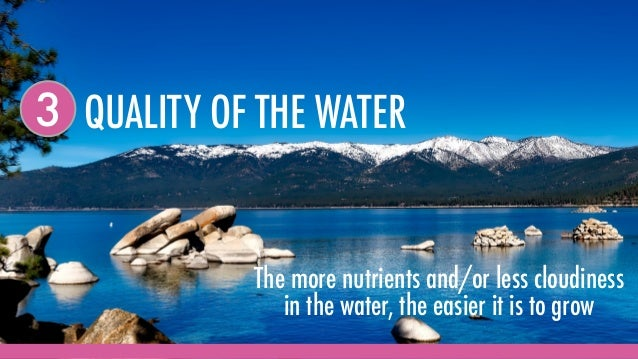 QUALITY OF THE WATER3 The more nutrients and/or less cloudiness in the water, the easier it is to grow