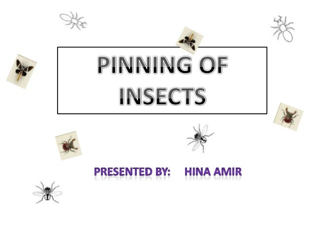  Steps of insect collection Equipments for pinning(description) Pinning of different insects(order) Arrangement