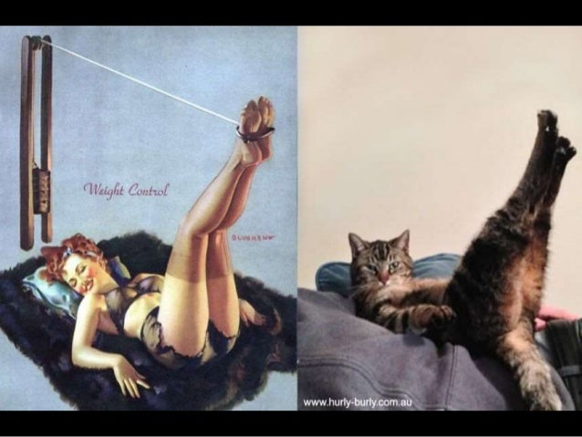 Pin Ups with Funny Cats