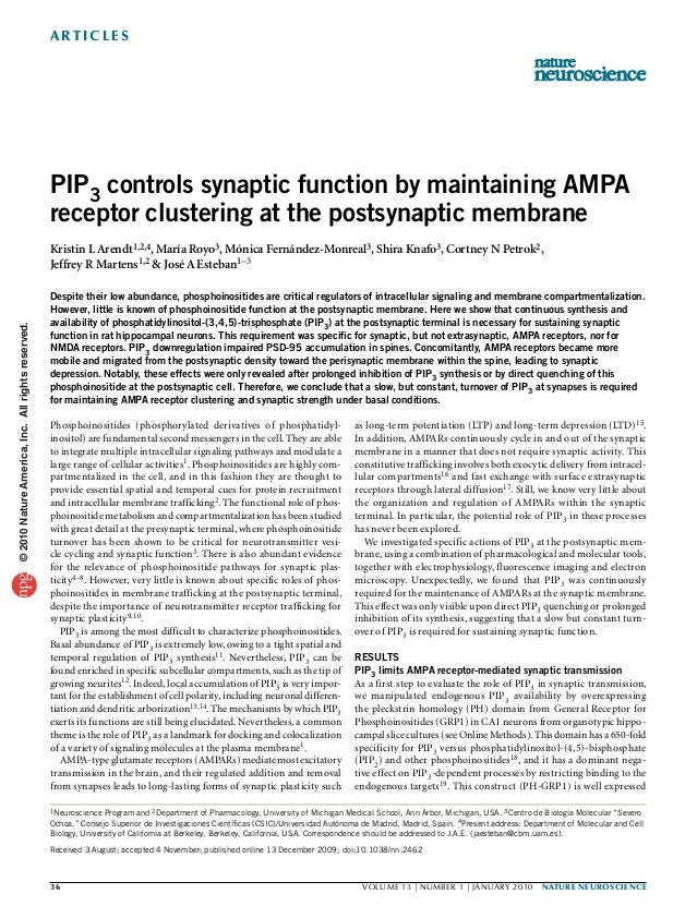a r t ic l e s                                                   PIP3 controls synaptic function by maintaining AMPA      ...