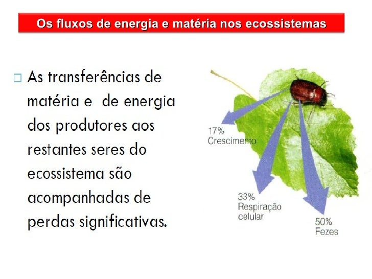 Os fluxos de energia e matéria nos ecossistemas