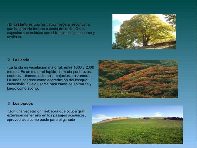 Tema 10 bosque matorrales estepas for Fresno caracteristicas