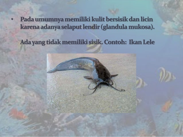 Biologi Animalia SMA Kelas 10 Pisces