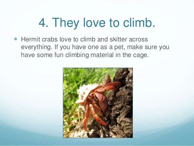 8 fun facts about hermit crabs for 5 facts about soil