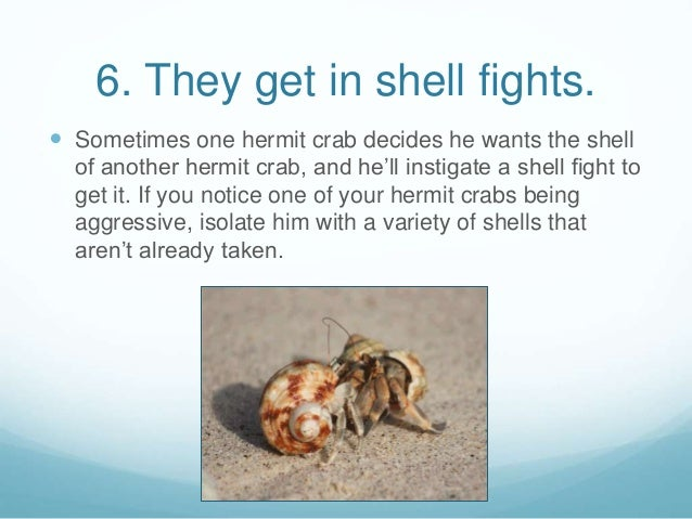 8 Fun Facts About Hermit Crabs