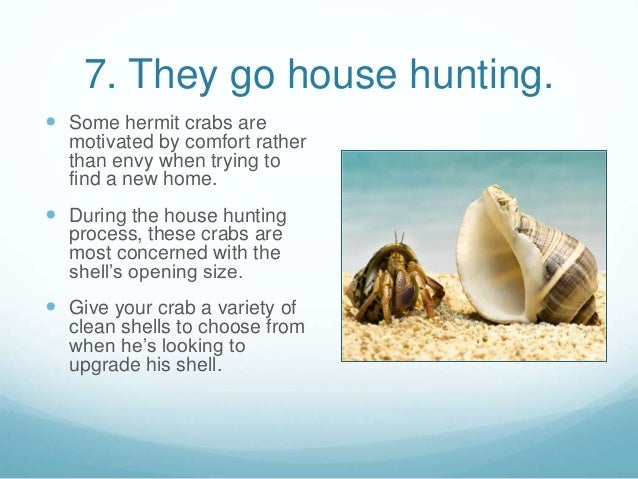 Hermit Crabs Facts For Kids | Kids Matttroy