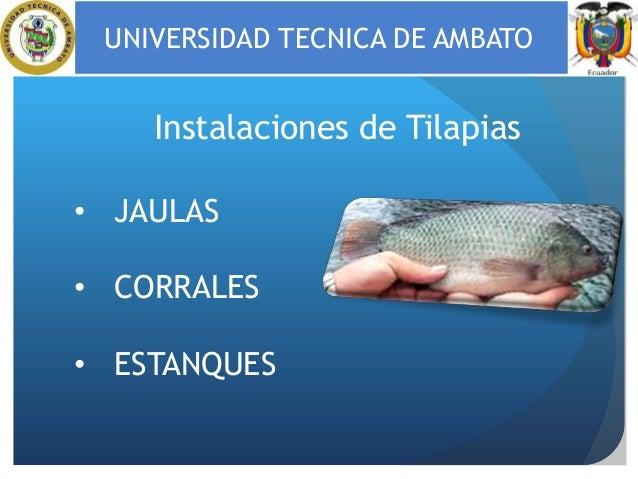 Instalaciones para piscicultura for Construccion de jaulas flotantes para tilapia