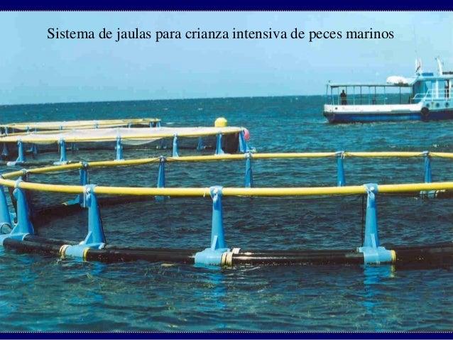 Piscicultura for Jaulas flotantes para piscicultura