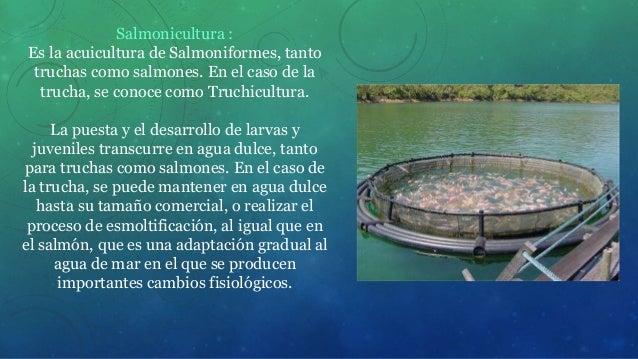 Piscicultura for Como criar truchas en estanques